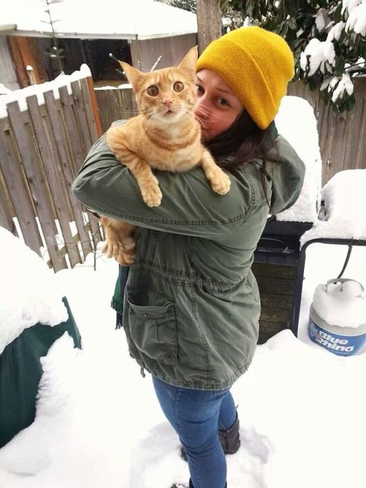 Cats Reacting To The First Snow (18 pics)