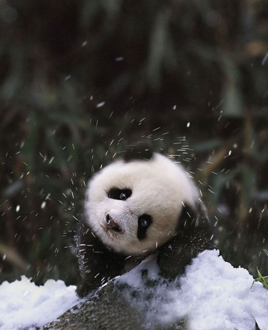 Animals See Snow For The First Time (36 pics)