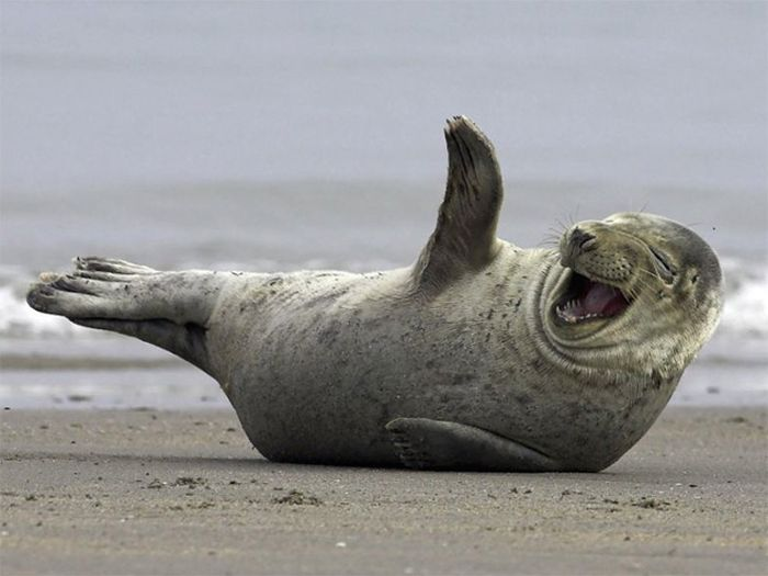 Laughing Animals (17 pics)