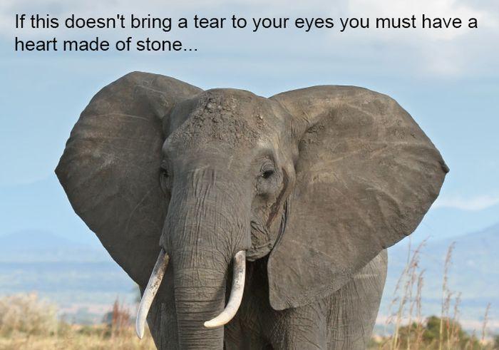 Elephants Never Forget (9 pics)