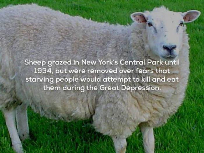 Creepy Facts (22 pics)