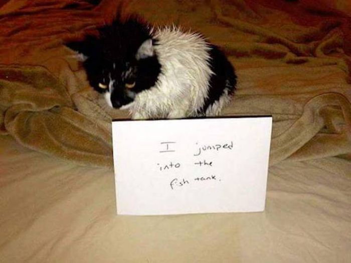Animal Shaming (28 pics)