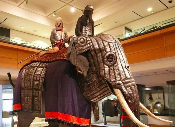 Elephant Body Armor (6 pics)