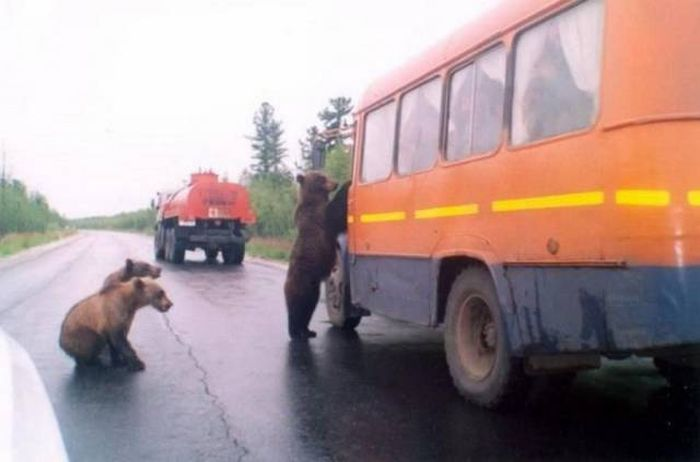 Only In Russia (37 pics)