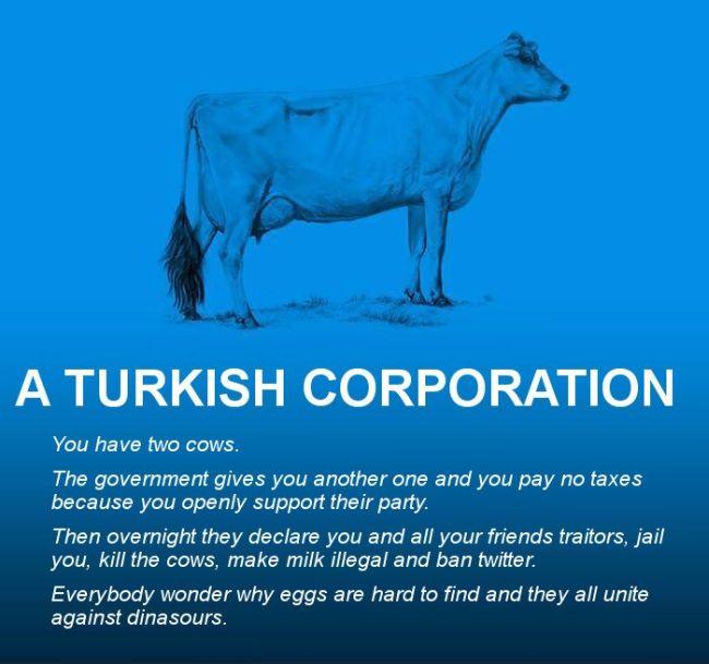 Cows Explain Economics (30 pics)