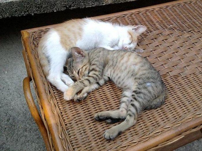 Cute Sleeping Animals (26 pics)