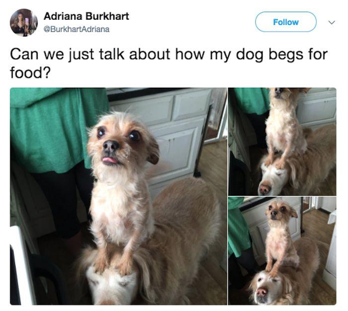 Pets' Bad Behaviour (26 pics)