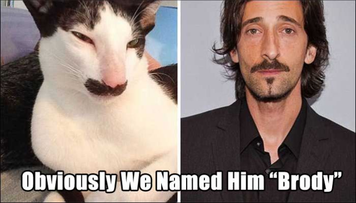 Pets With Incredibly Appropriate Names (20 pics)