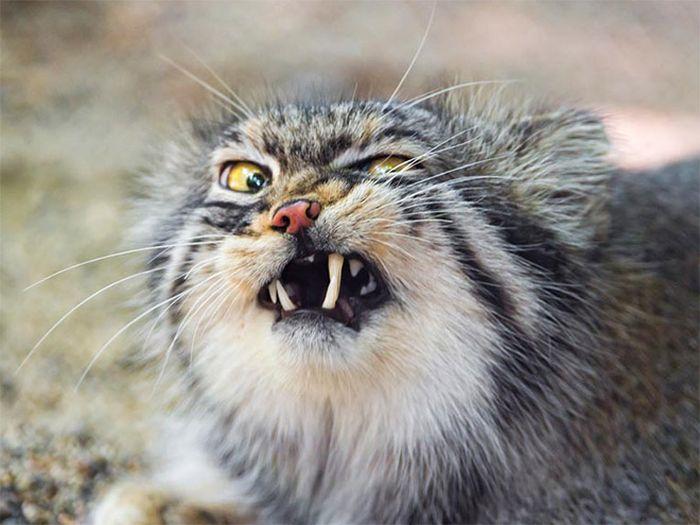 Sneezing Cats (16 pics)