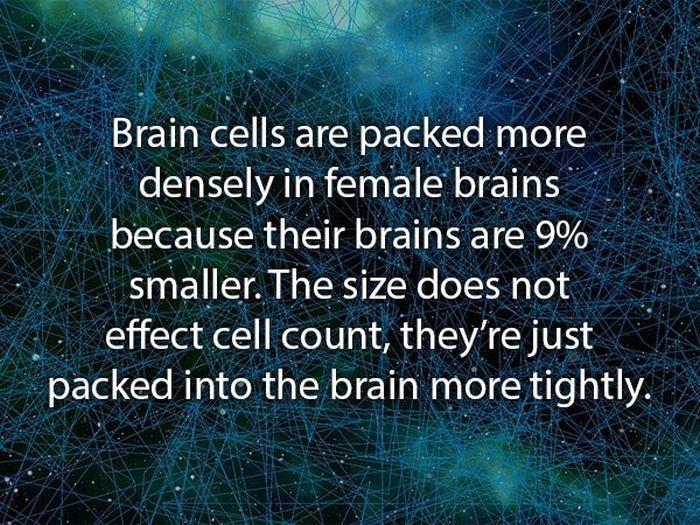 Weird Facts About Women (20 pics)