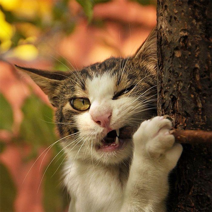 When Cats Attack (15 pics)