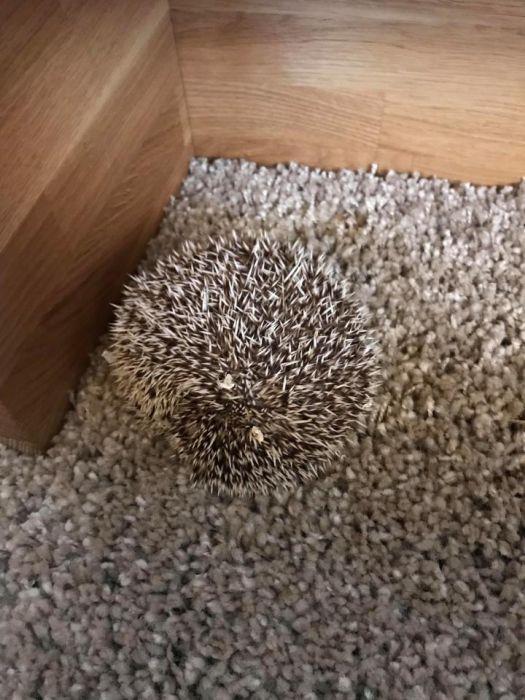 Hidden Pets (18 pics)