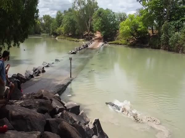 Crocodile Snags Fisherman's Catch at Cahills Crossing