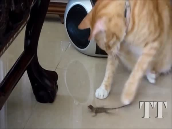 Cats vs Lizards Compilation