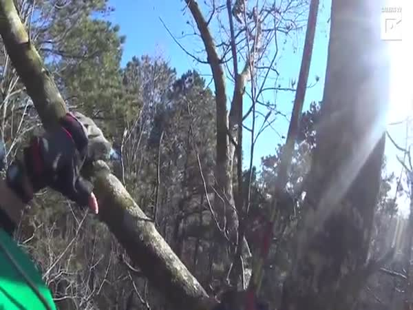 Cat Rescued From 70-Foot Tree After 7 Days