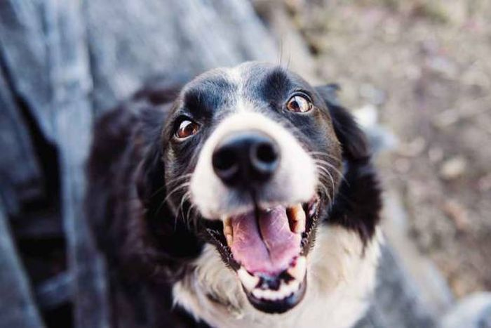 A Dog's Ten Commandments (2 pics)