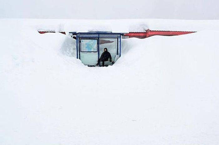 Winter Is Tough (51 pics)
