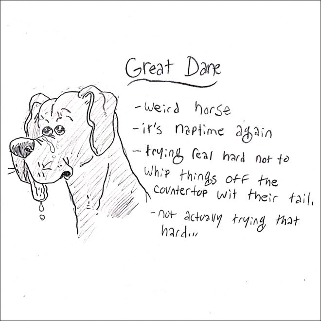 Illustrated Guide To Dog Breeds (15 pics)