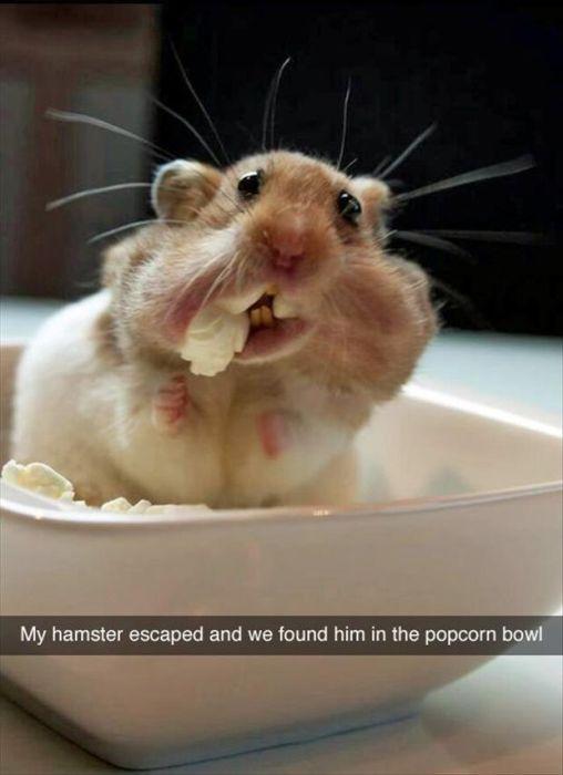Funny Animals (14 pics)