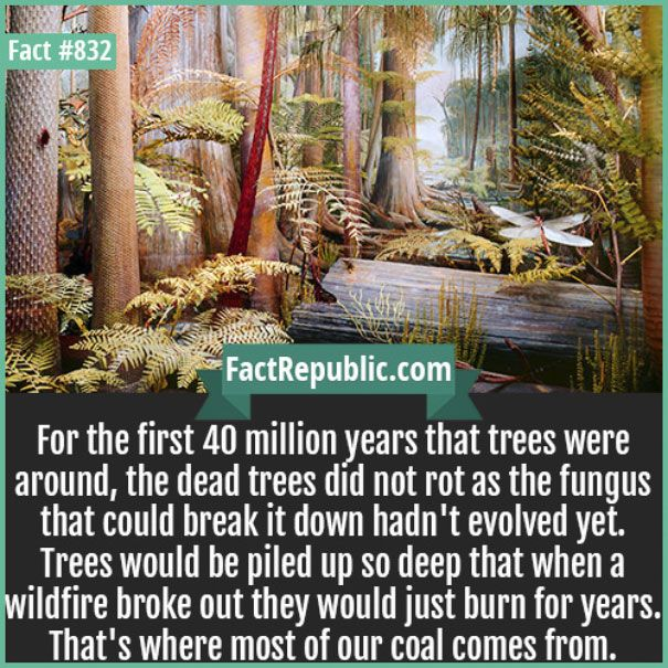 Facts That You Probably Didn't Know (30 pics)
