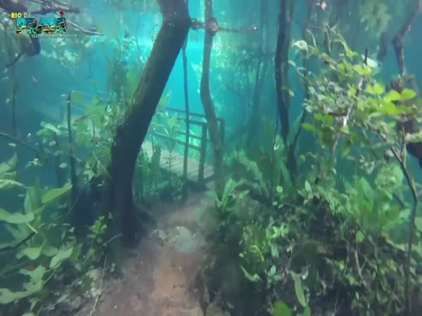 Rio Da Prata: The Flooded Forest