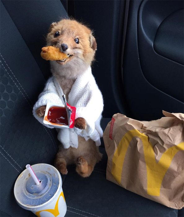 This Woman Takes Her Taxidermy Fox Everywhere She Goes (15 pics)