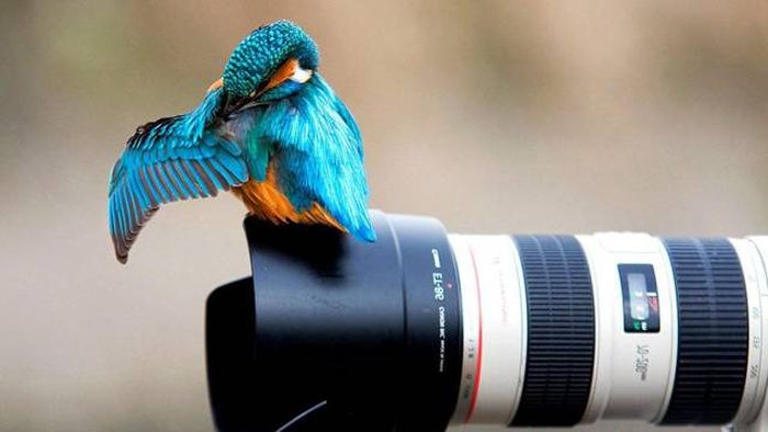 Awesome Pictures (56 pics)