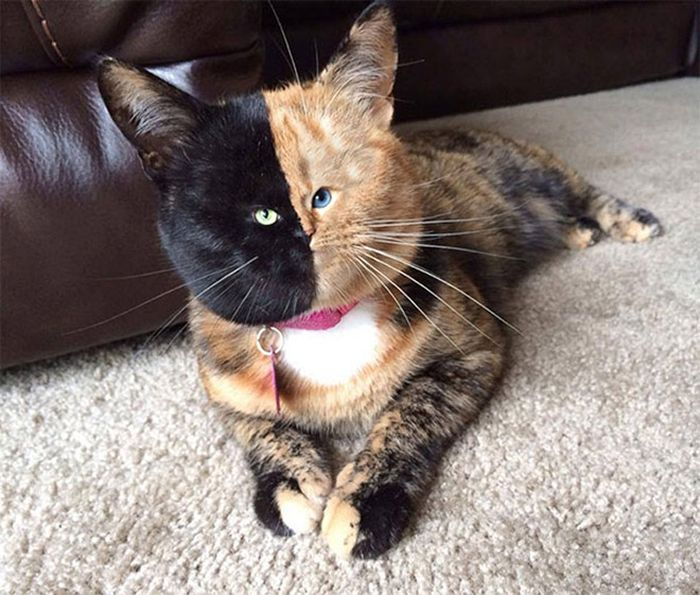 Cats With Tiny Faces! (18 pics)