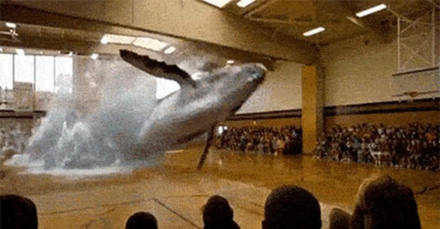 We Didn't See That Coming (15 gifs)