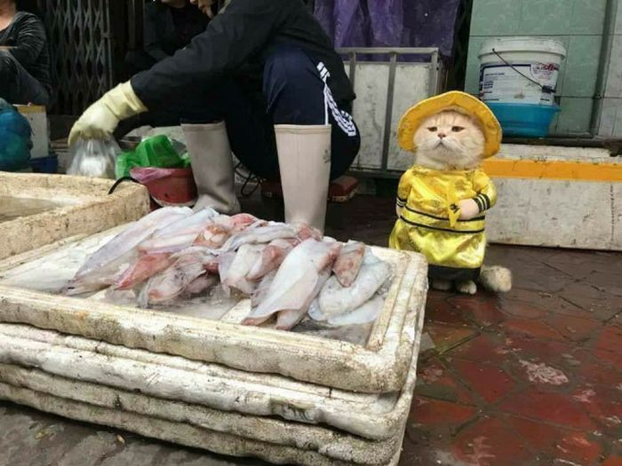 Fish Seller (5 pics)