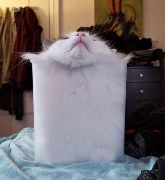 Cats Are Liquid (20 pics)