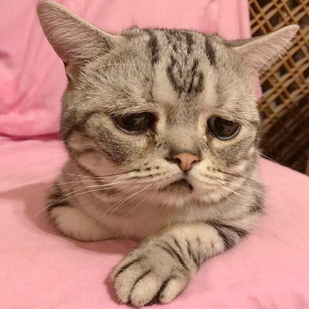 Luhu IsThe Saddest Cat In The World (12 pics)