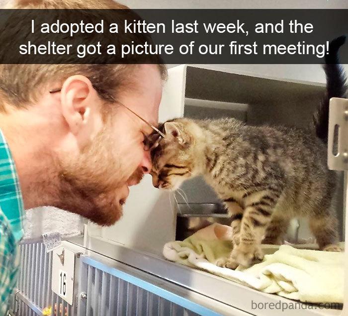 Funny Cats On Snapchat (40 pics)