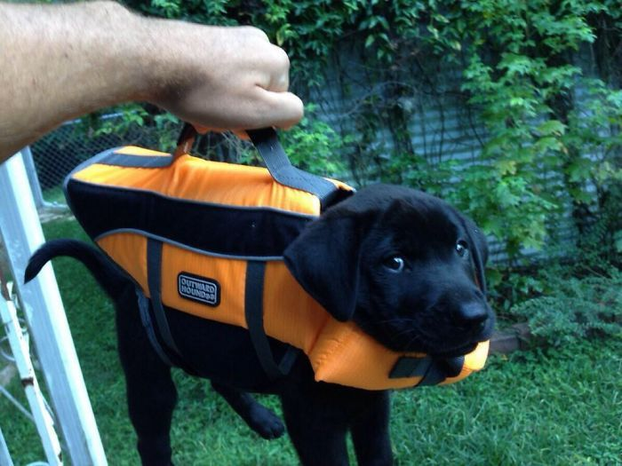 Retrievers Are The Best Dogs (30 pics)