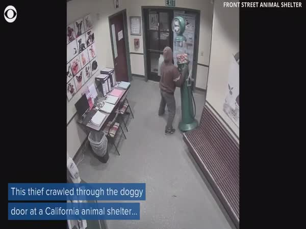 Thief Tries to Steal Gumball Machine Through Doggy Door