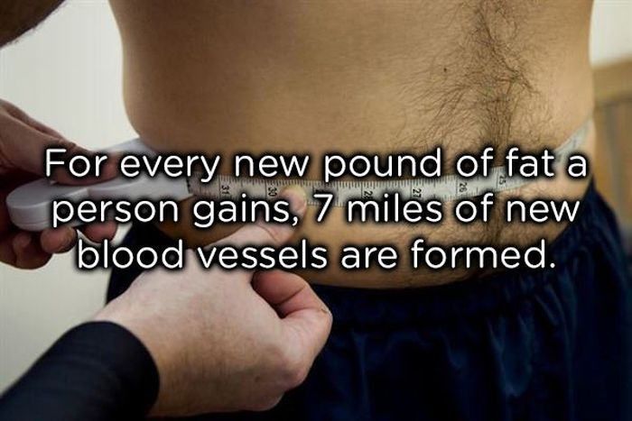 Facts About The Human Body (17 pics)