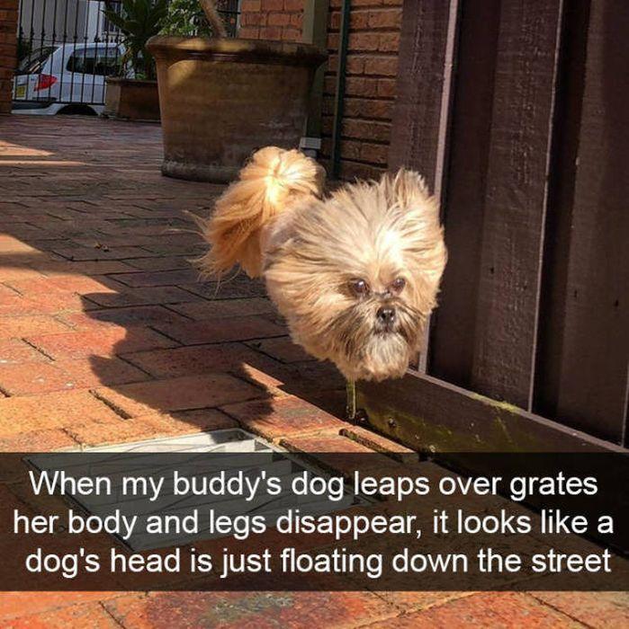Snapchats About Dogs (46 pics)