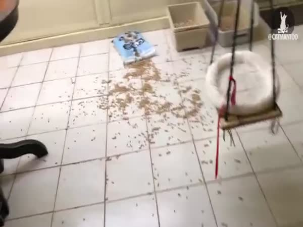 Who Made The Mess in The Kitchen?