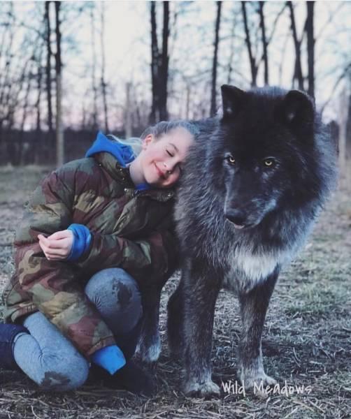 Wolf-Dog Hybrids (25 Pics