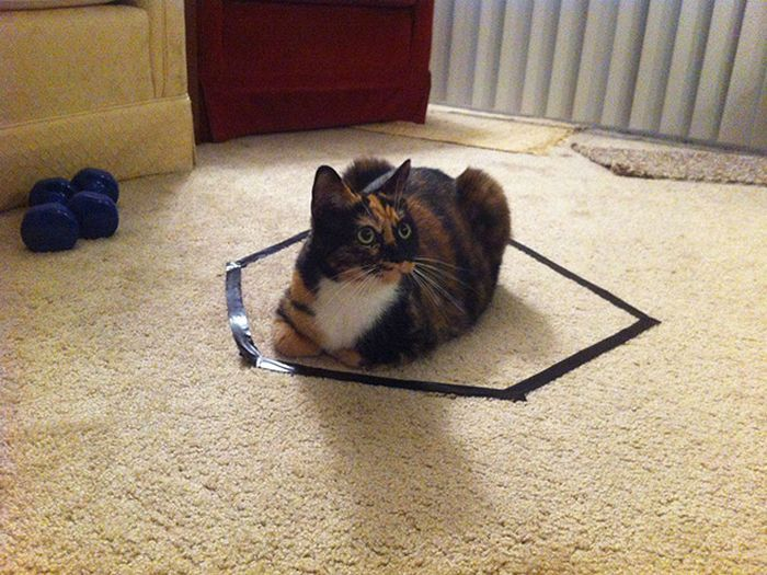 Cat Circles, The Phenomenon In Which a Cat Will Always Sit Inside a Circle (14 pics)