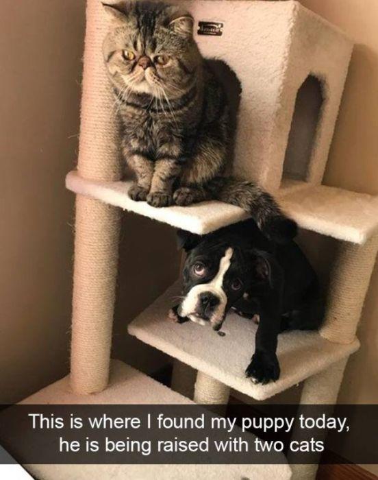 Funny Snapchat Dogs (40 pics)