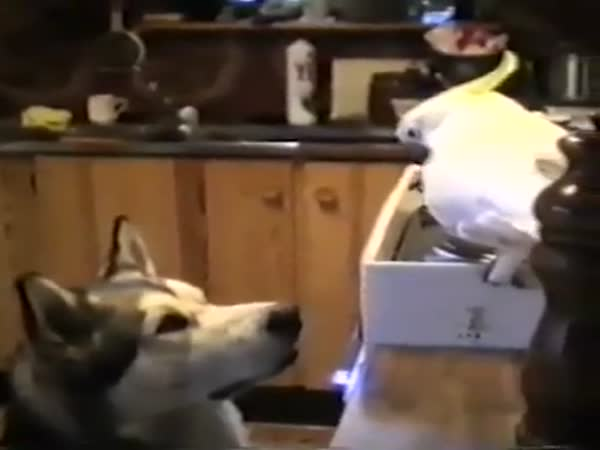 Parrot Feeding Dog