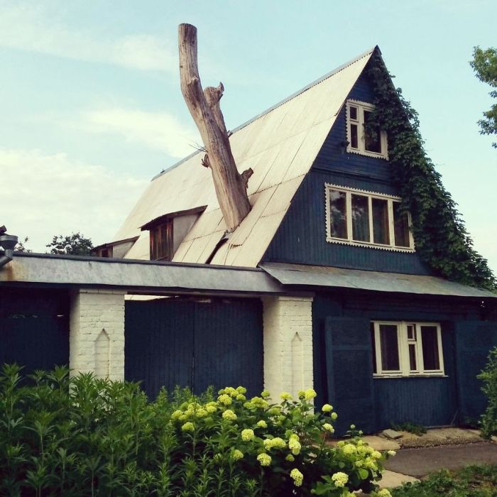 When Architects Didn't Want To Cut Down Trees (28 pics)