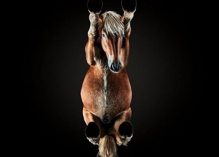 How To Make An Unusual Photo Of A Horse (14 pics)