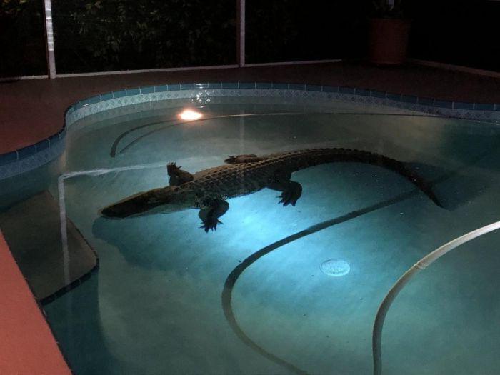 Welcome To Florida (4 pics)