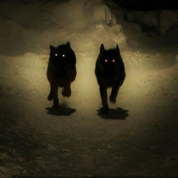 Creepy And Scary (39 pics)