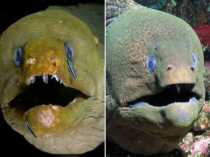 Cute Eels (16 pics)