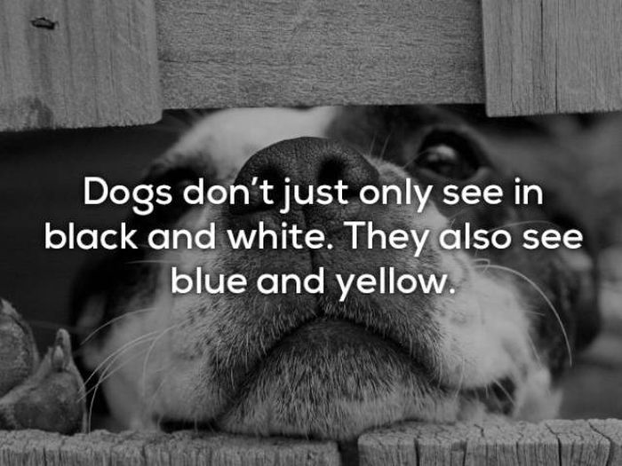 Facts About Dogs (24 pics)