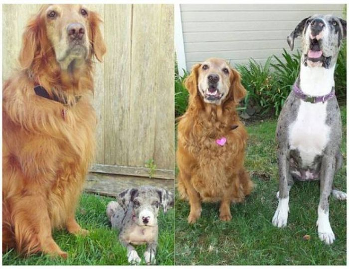 Adorable Dogs Then And Now (28 pics)