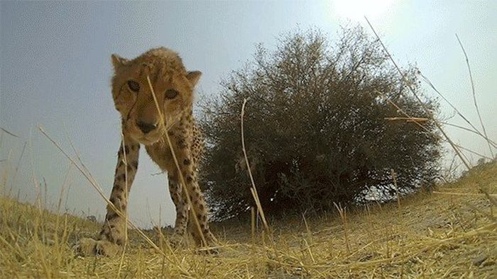 Awesome GoPro Moments (16 gifs)